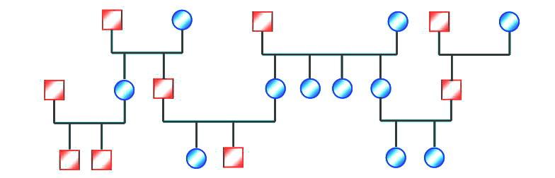 Analiza Genogramei